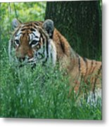 Predator In The Grass Metal Print