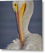 Preening Feather Fluff Beauty  Metal Print