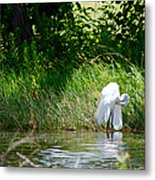 Preening In Tranquil Sunlight Metal Print