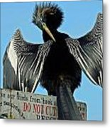 Preening Metal Print by Julie Cameron