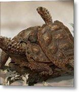 Prehistoric Turtles Metal Print