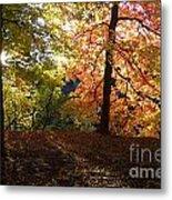 Preserve Trails In Fall Three Metal Print