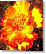 Prettiest Flower In The Garden Metal Print