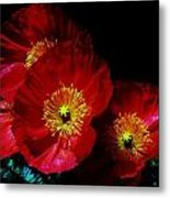Pretty As A Poppy Metal Print by Helen Carson