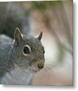 Pretty Boy Metal Print by Debbie Sikes