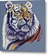 Pretty Boy Siberian Tiger Metal Print by Mary Dove