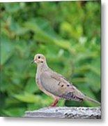 Pretty Dove Metal Print