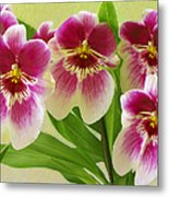 Pretty Faces - Orchid Metal Print