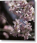 Pretty In Pink Blossom  Metal Print