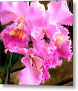 Pretty In Pink Cattleya Orchids Metal Print