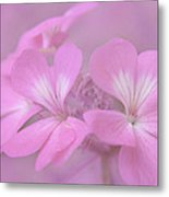 Pretty In Pink Metal Print by Jeff Swanson