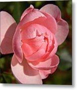 Pretty In Pink Rose Bud Metal Print