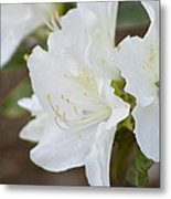 Pretty In White Azalea  Metal Print
