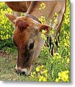 Pretty Jersey Cow Square Metal Print