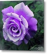 Pretty Lilac Rose Metal Print