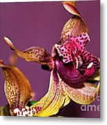 Pretty Orchid On Pink Metal Print