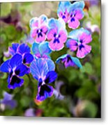 Pretty Pansies 2 Metal Print