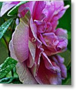 Pretty Pink Rose Metal Print