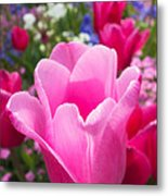 Pretty Pink Tulip And Field With Flowers And Tulips Metal Print