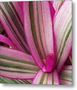 Pretty Plant Leaves 2 Metal Print