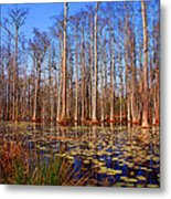 Pretty Swamp Scene Metal Print by Susanne Van Hulst