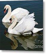 Pretty Swan Pair Metal Print