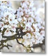 Pretty White Flowering Tree In Spring Metal Print