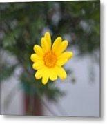 Pretty Yellow Flower Metal Print