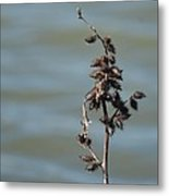 Prickly By Nature Metal Print