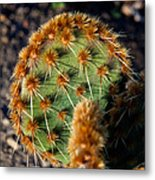 Prickly Cactus Leaf Green Brown Plant Fine Art Photography Print  Metal Print