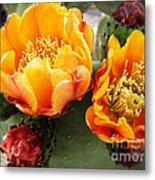 Prickly Pear Blossom Orange Metal Print