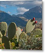 Prickly Pear Cactus And Mountains Metal Print