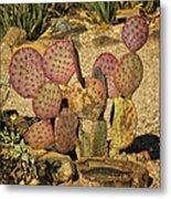 Prickly Pear Cactus Dsc08545 Metal Print