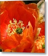 Prickly Pear In Bloom Metal Print