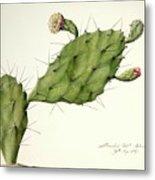 Prickly Pear (opunita Fiscus-indica) Metal Print
