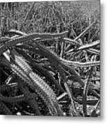 Prickly Perfection Metal Print