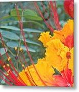 Pride Of Barbados Photo Metal Print