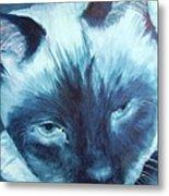 Prima Donna, Cat Metal Print