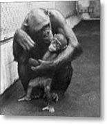 Primate Discipline Metal Print