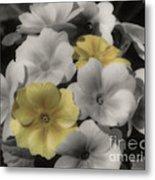Primrose Flowers Metal Print