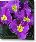Primrose Purple Metal Print