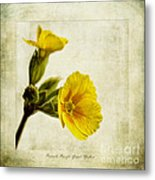 Primula Pacific Giant Yellow Metal Print by John Edwards