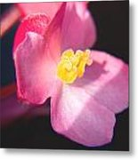 Bright Flower In Your Life Metal Print