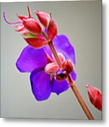 Princess Flower Blooms Metal Print