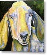 Prize Nubian Goat Metal Print