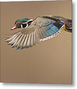 Probably The Most Beautiful Of All Duck Species Metal Print by Mircea Costina Photography