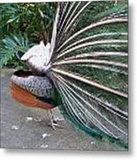 Profile Metal Print