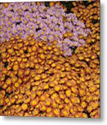 Profusion In Yellows Pinks And Oranges Metal Print