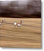 Pronghorn Antelope Metal Print