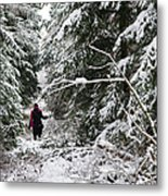 Protective Forest In Winter With Snow Covered Conifer Trees Metal Print